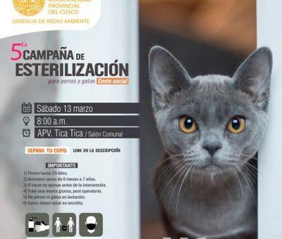 V campaña de esterilización canes y gatos